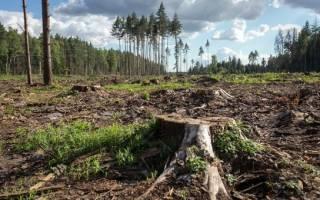 Как остановить деятельность человека по незаконной вырубке деревьев?