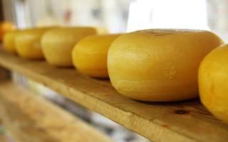 Домашняя сыроварня бизнес проект